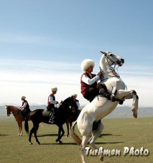 عکس اسب هاي ترکمن